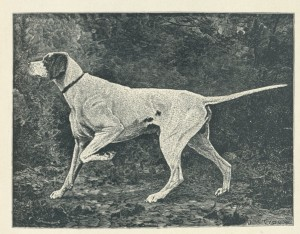Westminster Kennel Club 1886 0001